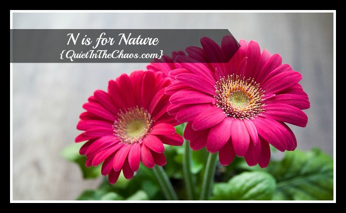 N is for Nature {QuietintheChaos.com}