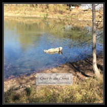 Thora Great Pyrenees loves the water {running buddy}