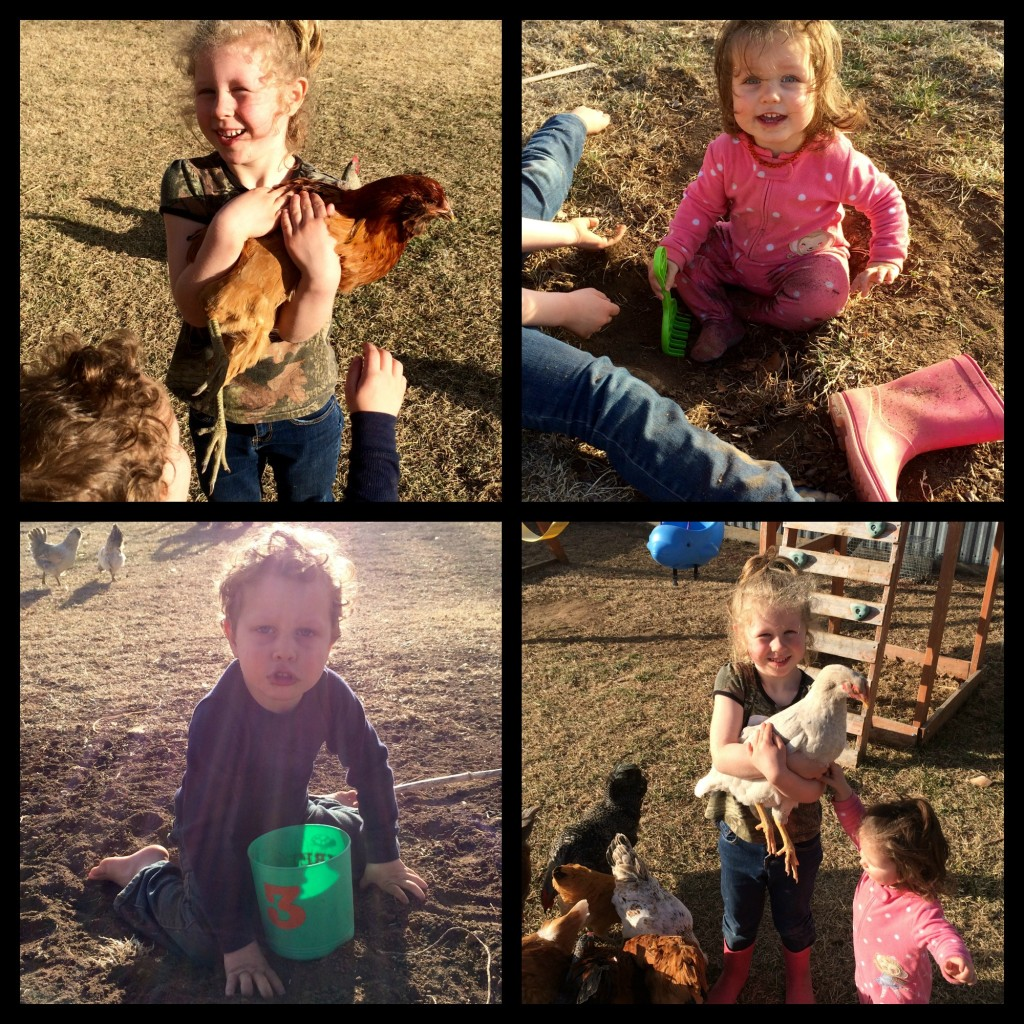 Chickens and Dirt