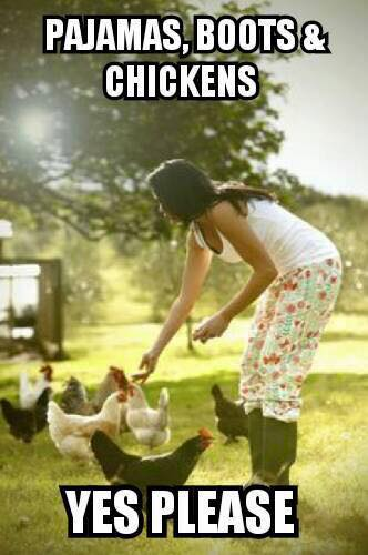 pjs and chickens