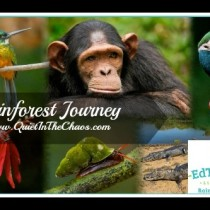 Rainforest Journey {a review by QuietInTheChaos.com}