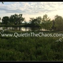 The pond is full, with spring rain! {QuietintheChaos.com}