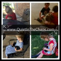 babies and chickens {wordless wednesday}